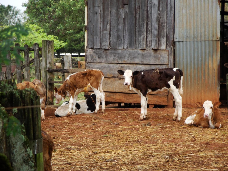Junta Local na Estrada | Dia 3: Fazenda Santa Luzia