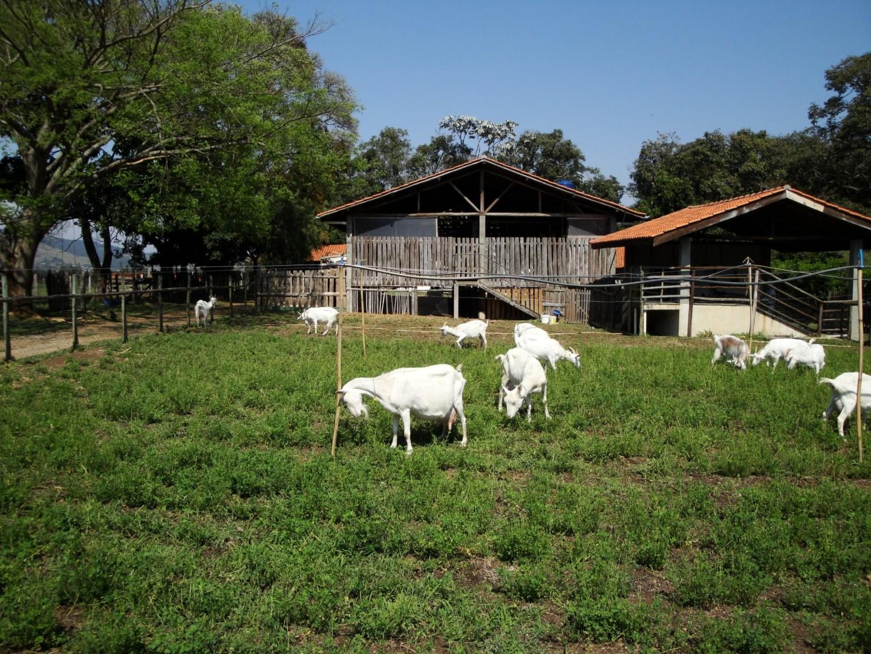 Junta Local na Estrada   Dia 2: Capril do Bosque