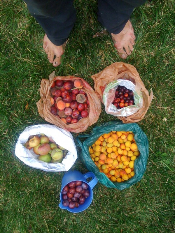 Falling Fruit_Founder Ethan Welty with Harvest